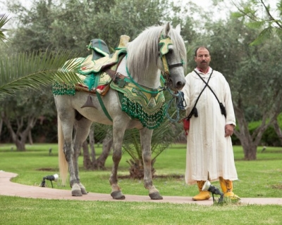 Cheval mariage